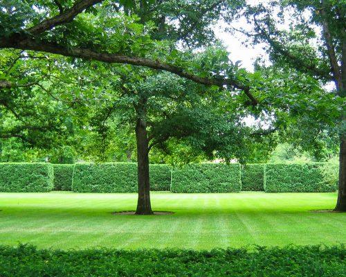 small-trees.jpg