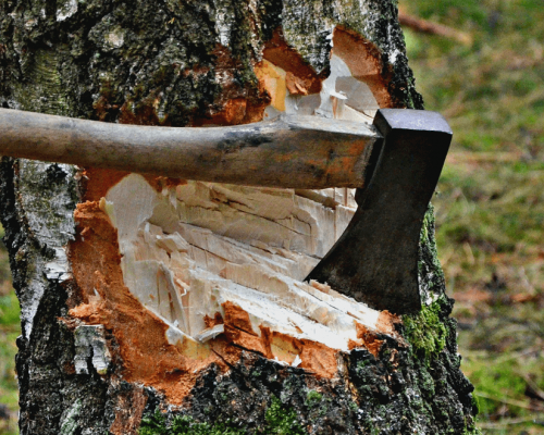 tree-removal-cost-per-tree-1080x660-1.png